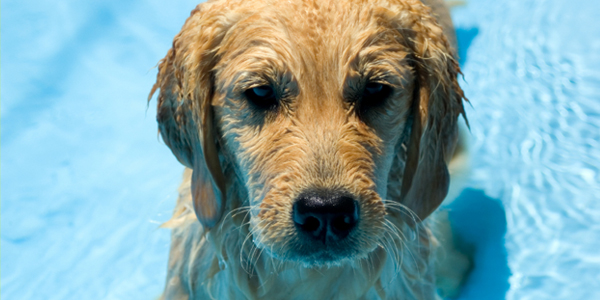 Keep Your Puppy Cool in the Summer Heat