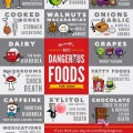 The Worlds Most Dangerous Foods for Dogs